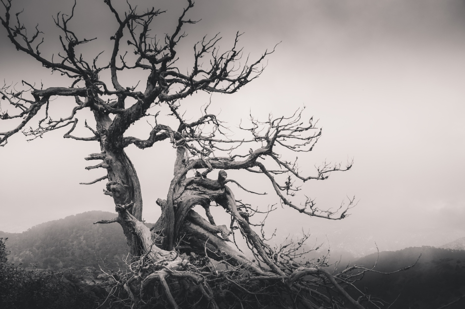 Dead tree in the foggy mountains
