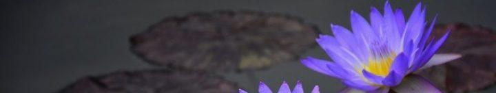 lotuslaura.com