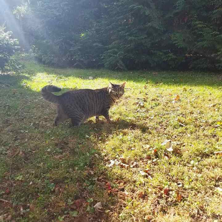 Caturday ~ backyard adventure