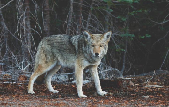 Mystery Monday ~Werewolves
