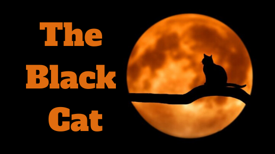 Caturday ~ The Black Cat