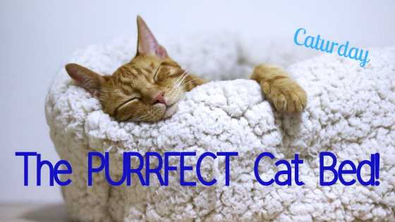 Caturday ~ the PURRFECT cat bed!
