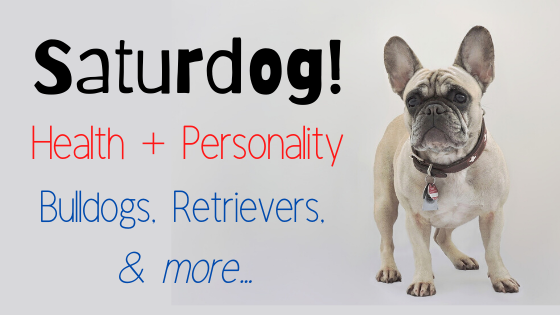 Saturdog ~ Health + Personality ~ Bulldogs, Retrievers, & more…