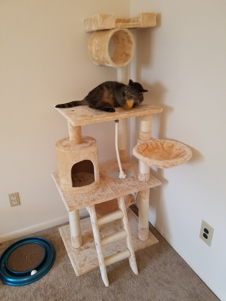 Caturday ~ Venus update, new cat tree!