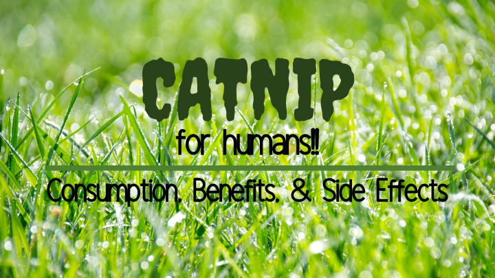Caturday ~ Catnip is not just for cats!