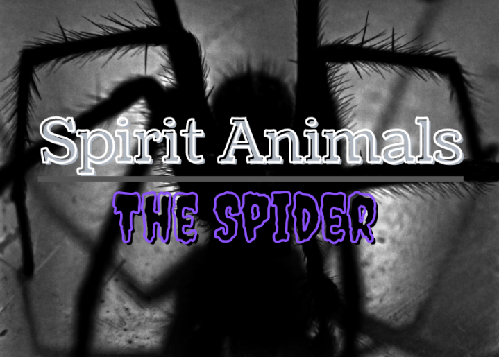 Spirit animal: Spider
